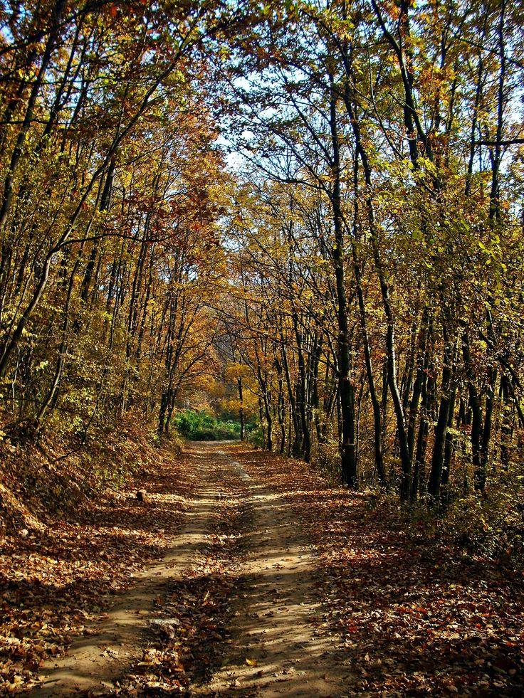 Fákkal övezett út