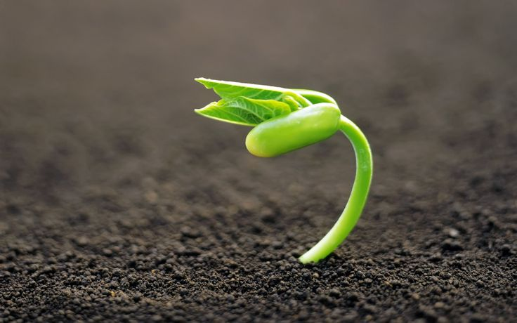 ¿Cómo hacer germinar a las semillas? Para que las semillas emerjan es necesario proporcionarles unas condiciones ideales de germinación,entra y descubrelas