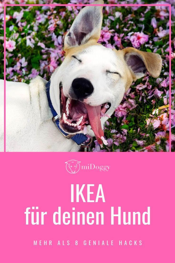 9 Ikea Hacks Fur Deinen Hund Hunde Spielzeug Hund Und Hundeprodukte