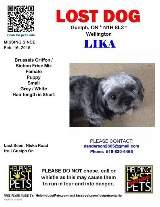 Lika young female Brussels Griffon X Bichon Frise mix puppy.  Went missing Feb. 2015 from the Wellington - Guelph, ON area.  Last seen on the Niska Road Trail.  If seen contact owner.