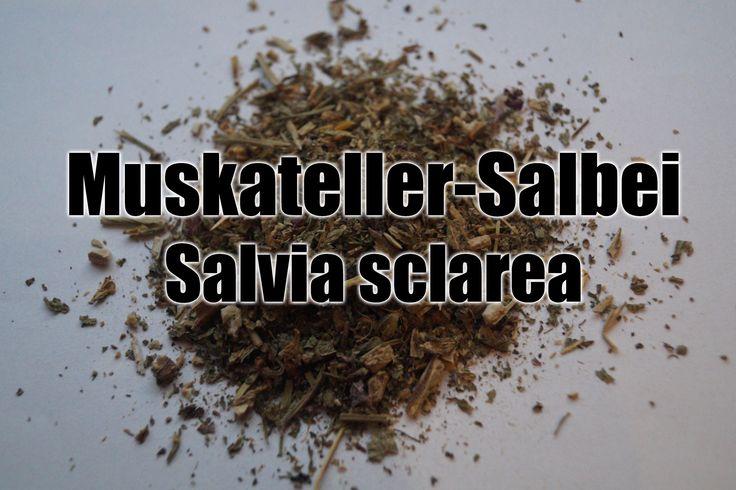 Muskatellersalbei (Salvia sclarea) ist eine Heilpflanze mit leicht psychoaktiver Wirkung, die geraucht & in Alkohol eingelegt wird. Infos!