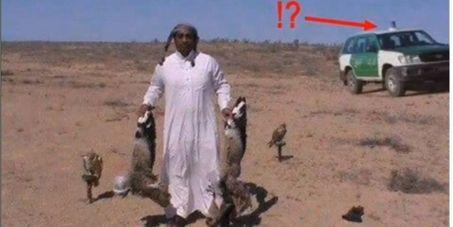 Au président de la république Algérienne: STOP au braconnage pratiqué par les émirs du Golf dans le Sahara