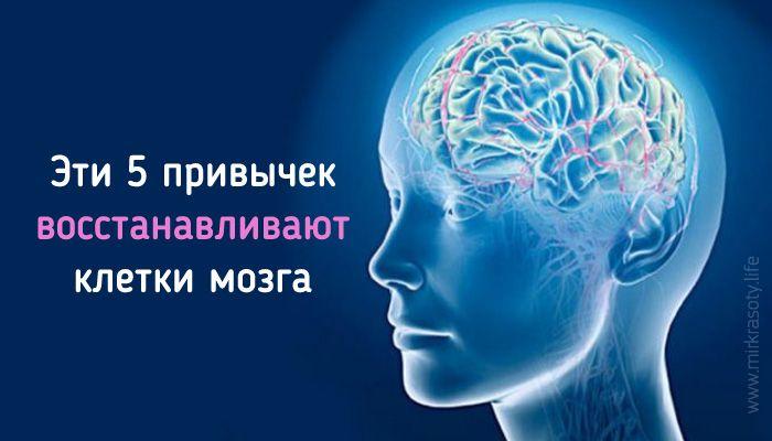 Доказано: наш мозг пластичен и обладает способностью к регенерации! Вот что помогает ему создавать новые нервные ткани…