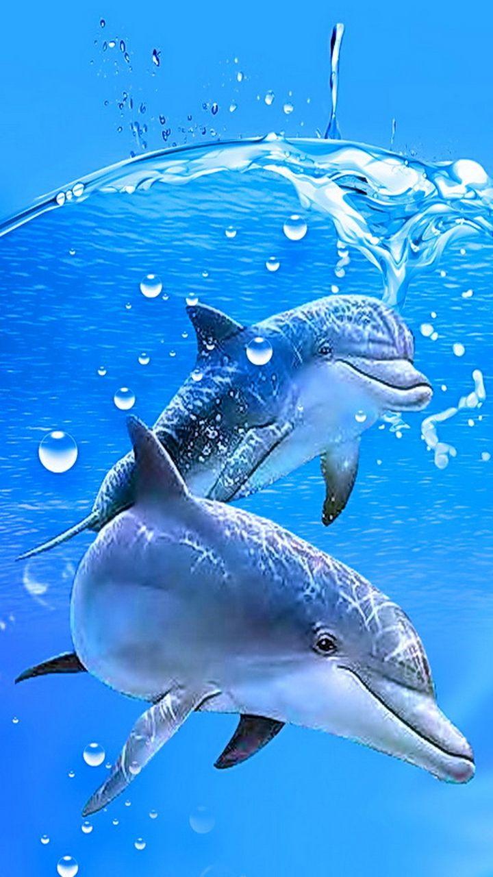 Дельфины картинки и анимашки