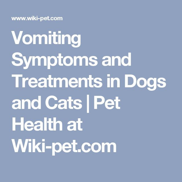 Vomiting Symptoms and Treatments in Dogs and Cats | Pet Health at Wiki-pet.com