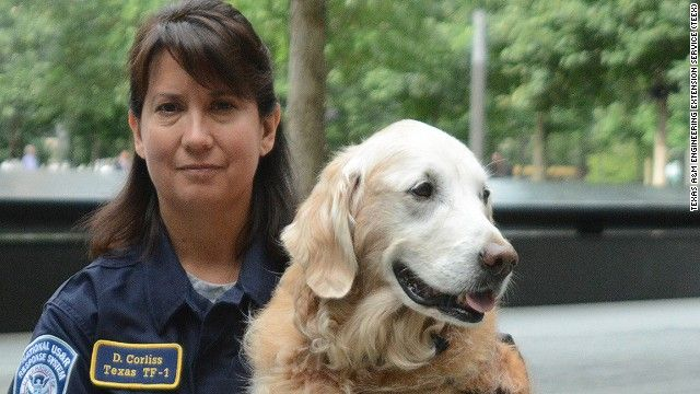 DOLLY HERO Bretagne, one of the last surviving 9/11 search and rescue dogs, is now helping kids cope with school - via @rannpatterson ❤ Dolly