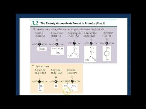 amino acids peptide bonds - http://www.sportsnutritionshack.com/amino-acids/amino-acids-peptide-bonds/
