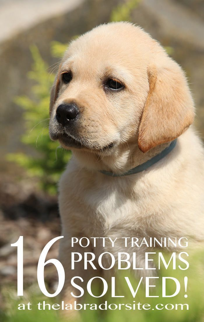 15 Puppy Potty Training Problems Solved Dog Training Books