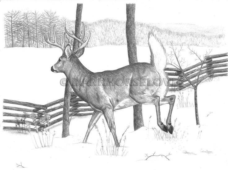 199 Best Deer Sketches Images On Pinterest Deer Sketch Animal
