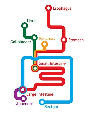 pterodactylpants:  (via FFFFOUND! | The Gastrointestinal System Represented As A Subway Map | Laughing Squid)