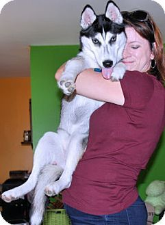 Bowling Green, VA - Siberian Husky. Meet Mary Lou, a dog for adoption. http://www.adoptapet.com/pet/16740285-bowling-green-virginia-siberian-husky
