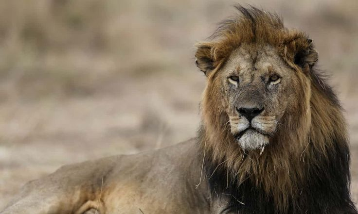 """A """"biological annihilation"""" of wildlife in recent decades means a sixth mass extinction in Earth's history is under way and is more severe than previously"""