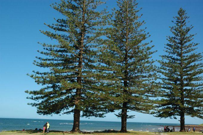 Scarborough Beach Park Scarborough | Brisbane Kids Parks | MDB