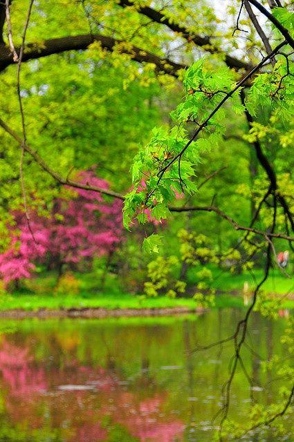 Green with pink, Pszczyna, Poland