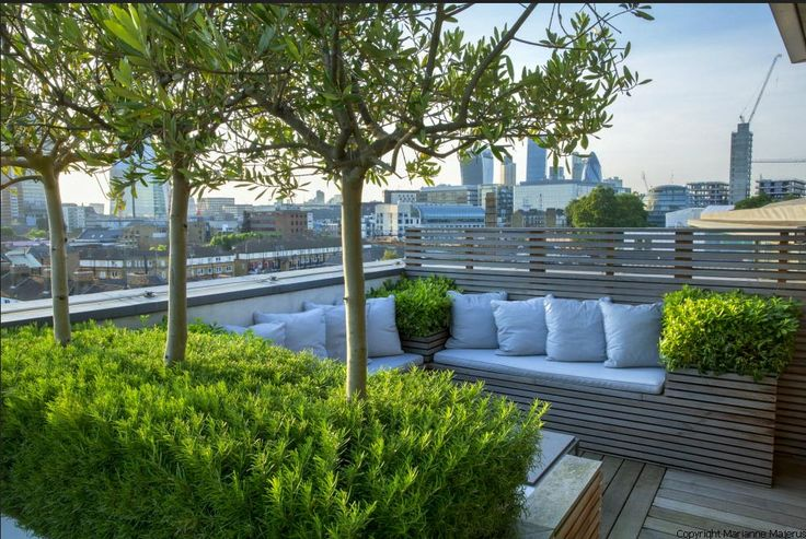 Rooftop in Bermondsey | Olive trees underplanted with rosemary surround contemporary built-in bench on London roof terrace | Charlotte Rowe Garden Design