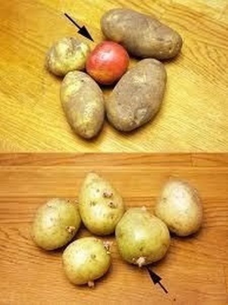 Keep an apple in with your potatoes to keep them from budding
