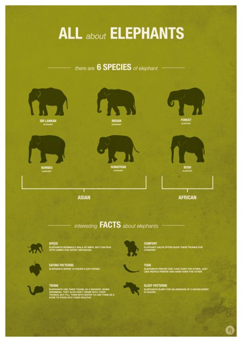 "Genus name species name anyone?!  The Asian elephant is categorized by subspecies not species. Who makes these ""fact"" lists?!"