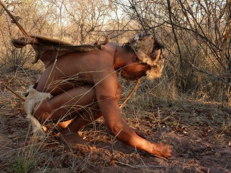 Bushman tracking