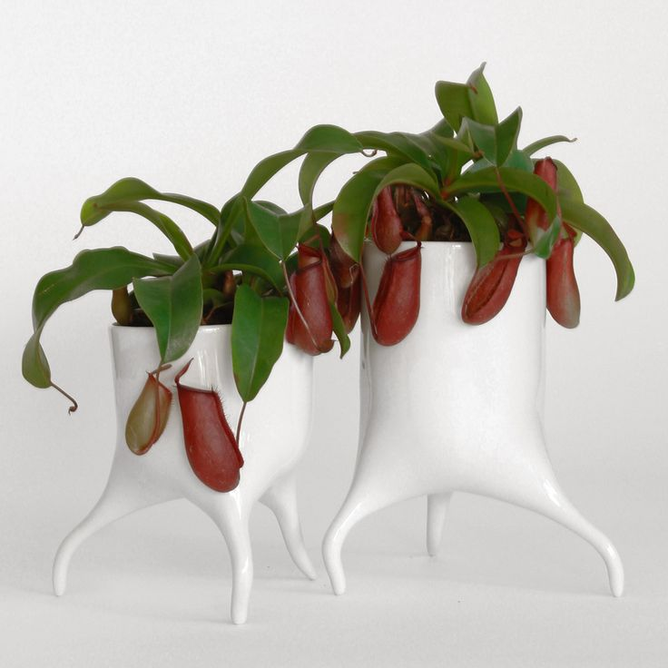 Tim Van De Weerdu0027s Carnivora Plant Pots Designed To Look Like They Could  Wanderu2026
