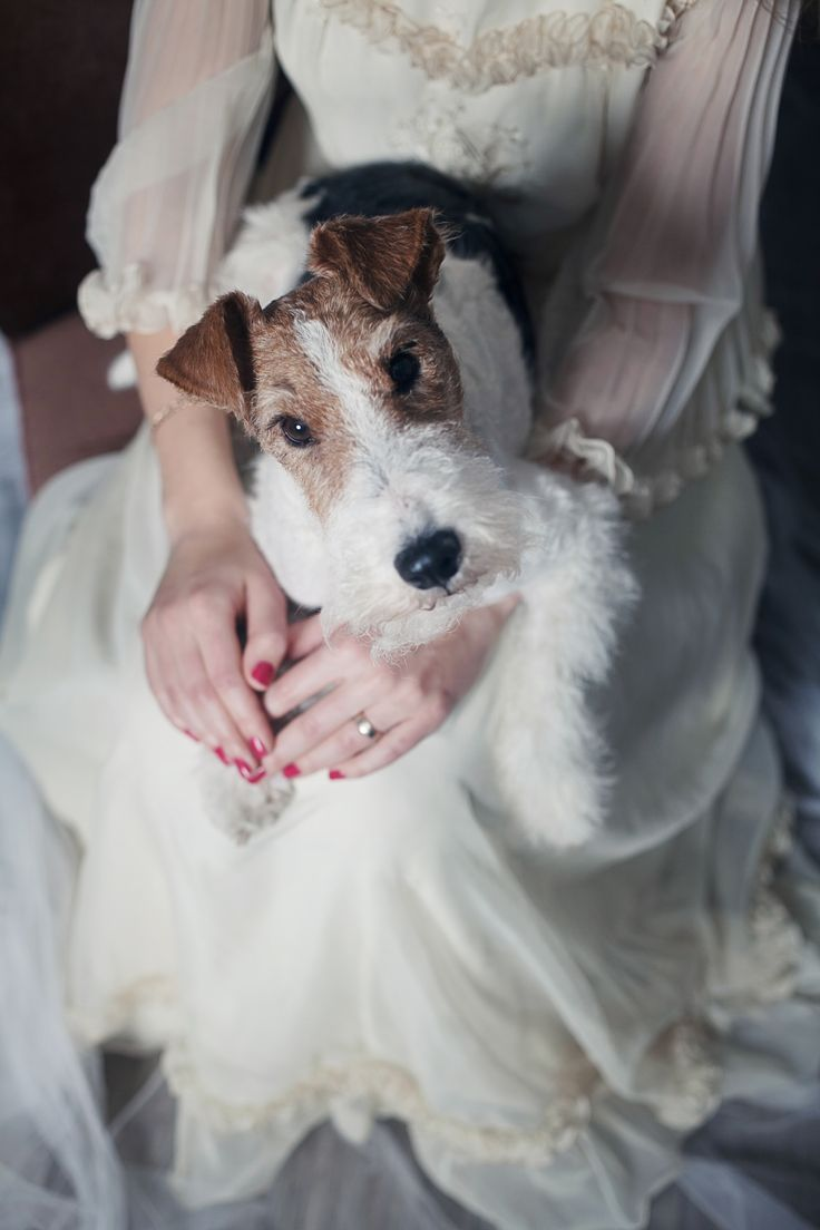 40 best Wirefox terrier images on Pinterest | Pets, Wire fox ...