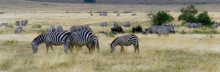 The #TanzaniaSafari is designed to enable mini break holiday makers to enjoy the taste of nature. Know more @ https://www.northernmasailandsafaris.com/
