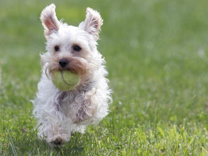 Dog Play Room | dog-playing