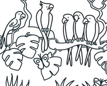 Kleurplaat Papegaaien  Kleuters Thema oerwoud  Pinterest