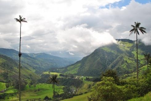 Valle del Cocora, Quindio, Colombia