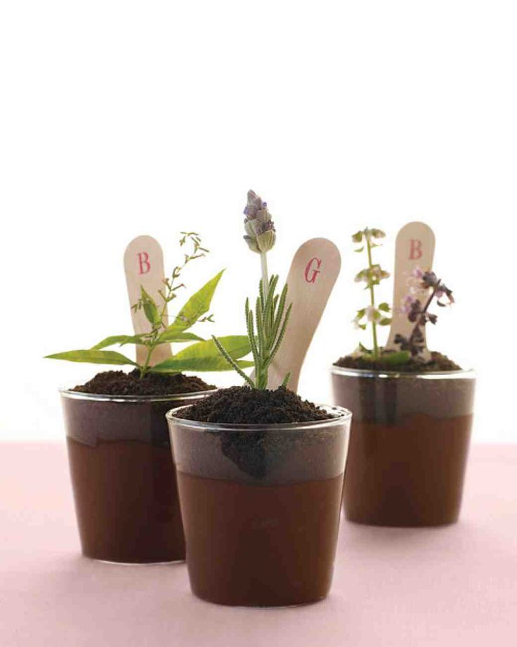 """Recipe : """"Potted"""" Chocolate Pudding"""