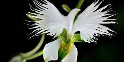 18 különleges virág, ami valami másnak tűnik