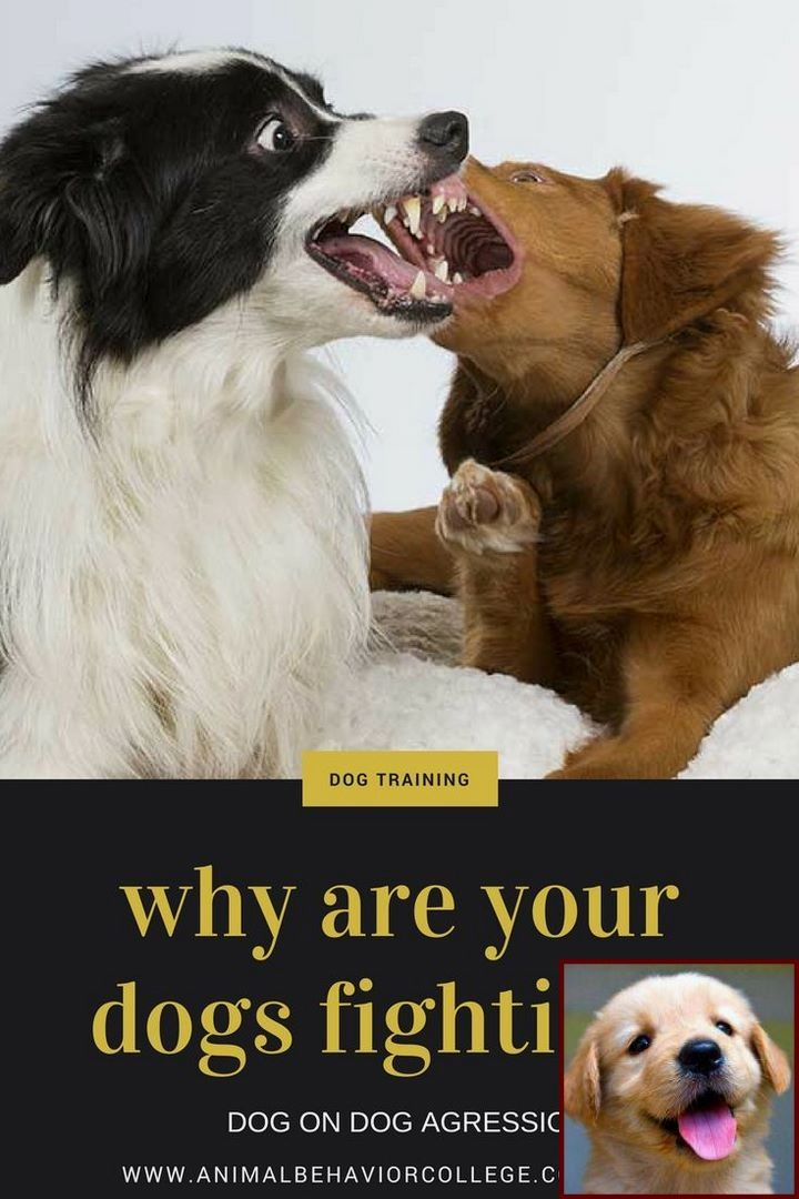 1 Have Dog Behavior Problems Learn About Potty Training A Puppy To Go Outside And Dog Training Classes Nor Aggressive Dog Dog Training Dog Training Obedience