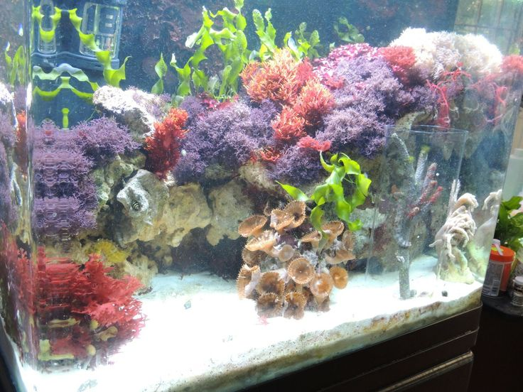 11 best marine aquariums and fish images on pinterest for Seahorse fish tank