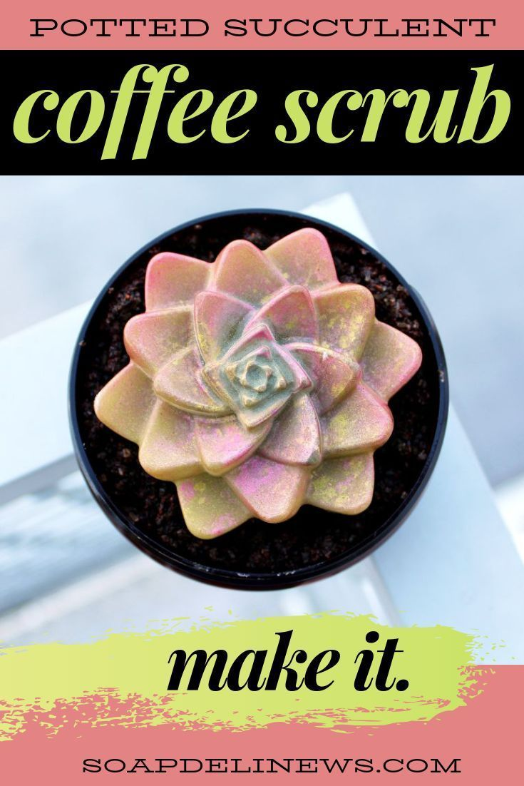 Potted succulent coffee scrub recipe for natural summer skin care. Made with a b…