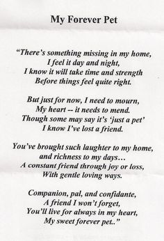 quotes for cat passing away - Google Search