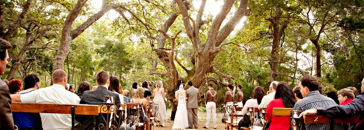 weddings south africa - Google Search