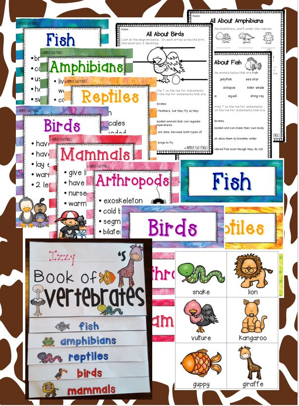 This unit will have every resource you need to help your students become experts at classifying animals including: flip books, anchor charts, sorting pictures, and assessments. $