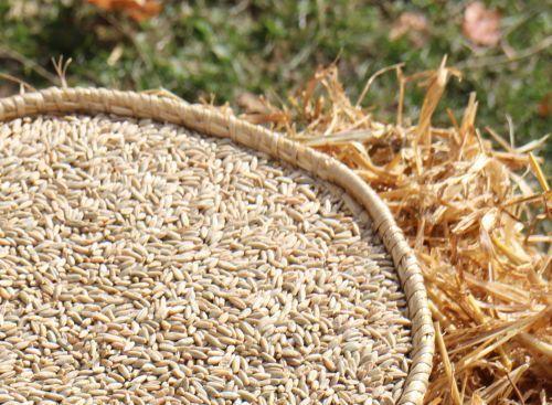 Painea pustniceasca este un aliment intalnit mai ales in viata pustnicilor din vechime, de la care aceasta paine isi trage si numele. Numita uneori si