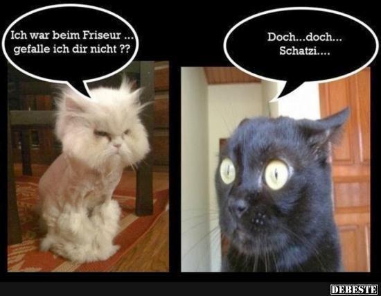 Besten Bilder, Videos und Sprüche und es kommen täglich neue lustige Facebook … – Katzen Bilder