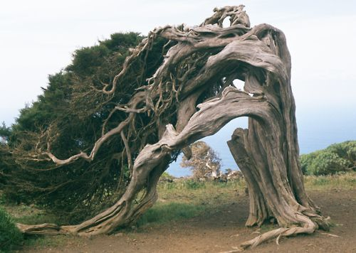 Again, no idea where this is but I would venture a guess that it's north CA coast. I love those Cypress trees. Amazing wind shapes these amazing trees.