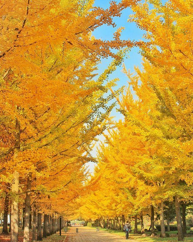 Yamagata Prefectural General Sports Park, Tendo, Yamagata, Japan, 山形県総合運動公園, 天童, 山形, 日本