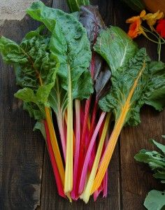 Successful Vegetables: Our Top 10 Crops for Beginner Gardeners | High Mowing Organic Seeds' Blog – The Seed Hopper