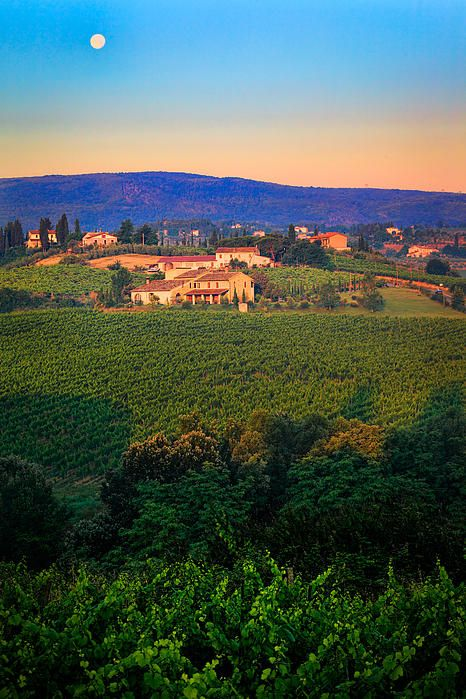 San Gimignano Vineyards, Siena, Tuscany, Italy.  I will be there soon!