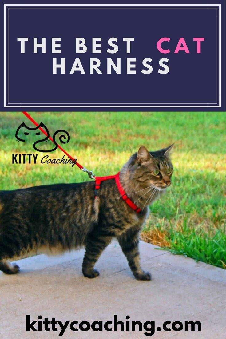 Looking for the best cat harness? You'll find the right one in our top 5 cat harness list, plus how to train a cat to accept a harness.