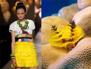 biomimicry fashion - Google Search