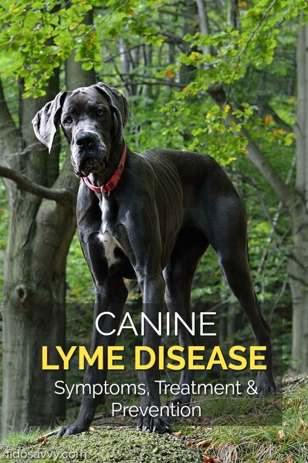 Lyme Disease In Dogs Keeping Fido Safe Lyme Disease In Dogs