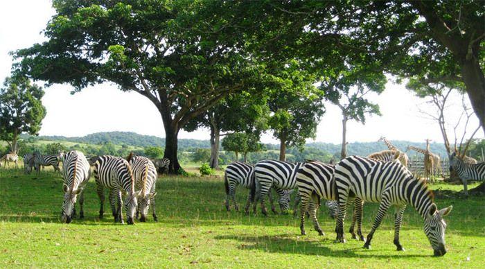 Calauit Safari, Coron, Palawan #clubparadise