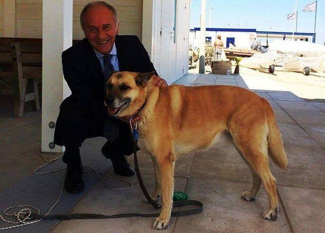 La storia di Kyra, la cagnolina che aspetta ogni giorno sulla spiaggia il padrone morto. Ricorda il mitico Hachiko | The Horsemoon Post