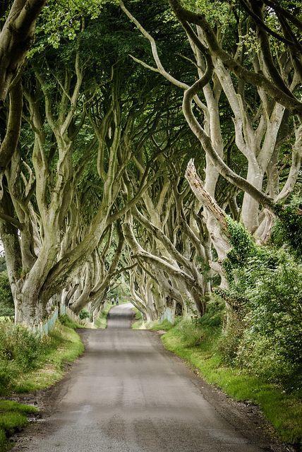 Northern Ireland Imagina a paz que deve se sentir caminhando por essa estrada.