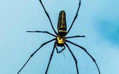 Insecticida para arañas de aceites esenciales - Trucos de hogar caseros