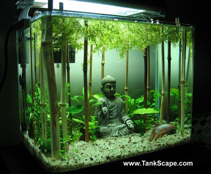 111 best betta fish tanks images on pinterest for Bubbles in betta fish tank